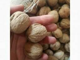 Продам грецкие орехи оптом - фото 2