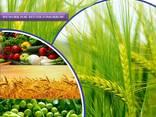 Produsent og leverandør av plantevernmidler over hele verden - фото 1