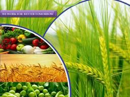 Produsent og leverandør av plantevernmidler over hele verden